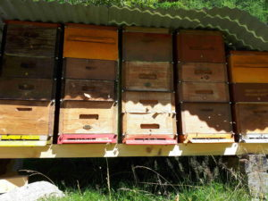Biene, Bienenhaltung