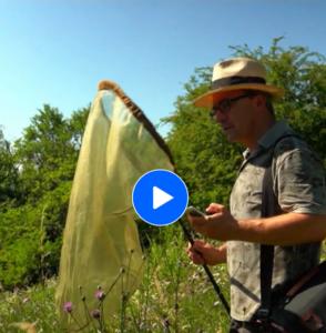 ARD Mediathek – Das Große Insektensterben, was können wir tun?