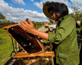 Kuba ist ein pestizidfreier Staat