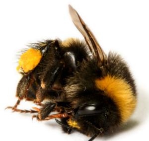 hochgefährliches Pestizid vergiftet europäische Felder: Sulfoxaflor