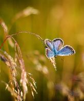 Pestizide sind verantwortlich für das Artensterben