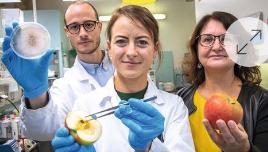Lagerfähigkeit von Obst und Gemüse: Bio-Behandlung